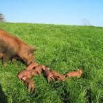 Connie-Herding-Her-Babies.jpg